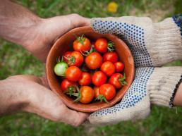 Streamlining food production