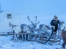 Arctic Opportunity Explorers - reindeer, northern Siberia